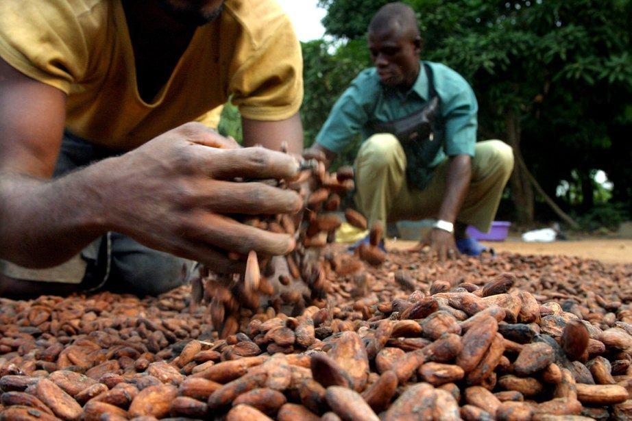 planteurs cacao